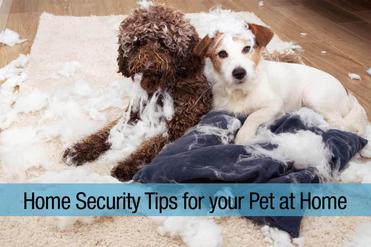 Home-Security-Tips-for-your-Pet-at-Home